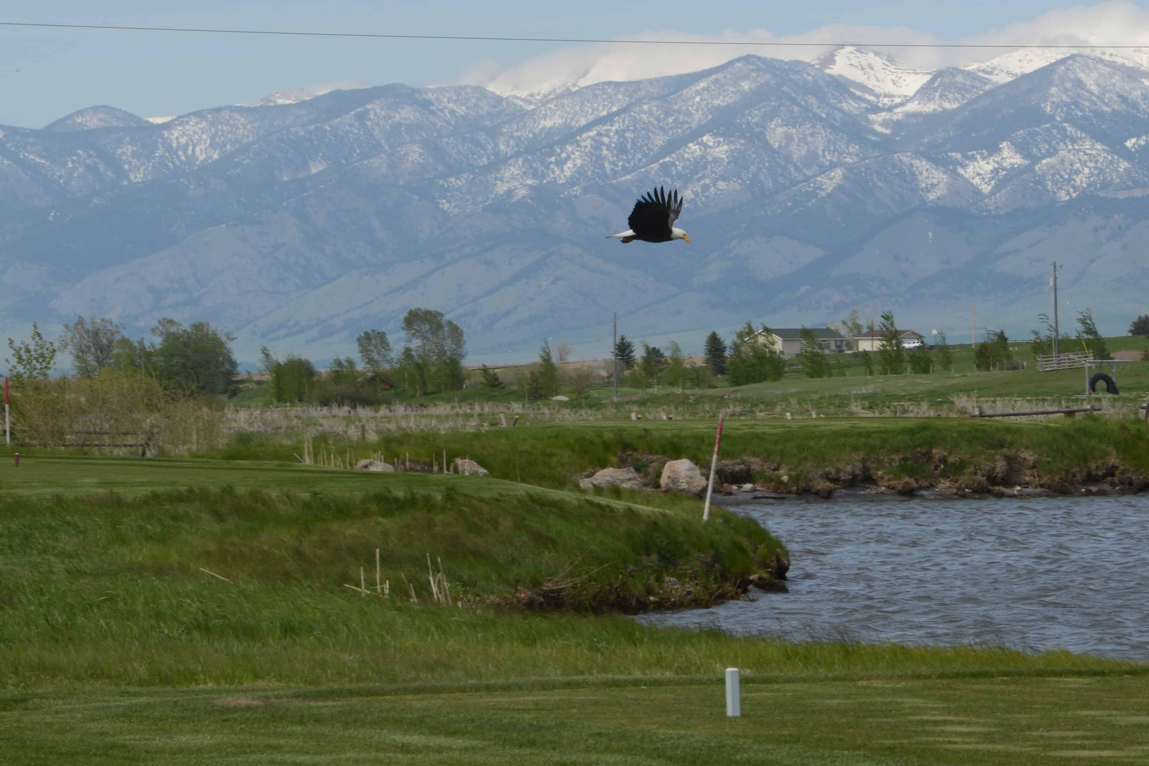 Bald Eagle at Black Bull | Bozeman Luxury Real Estate