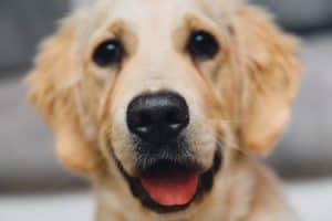 night-animal-dog-pet-Bozeman-Luxury-Real-Estate