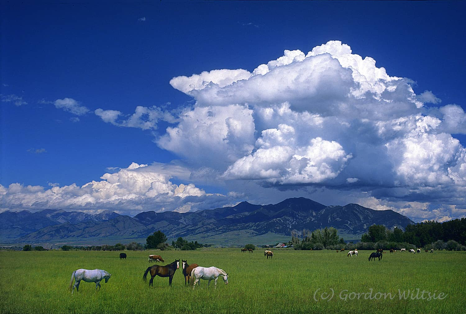 Ranches for sale in Montana 1